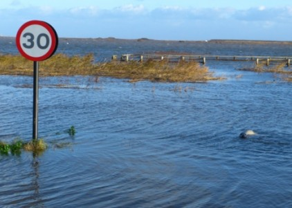 A flooded habitat in Norfolk, with a seal far away from its usual haunt.  Credit: Marcus Nash