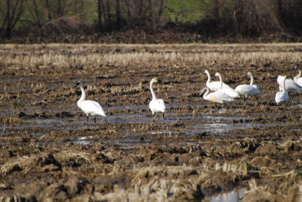 When saving the planet can hurt wetland birds