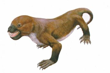 tritylodontids - the last link between mammals and reptiles