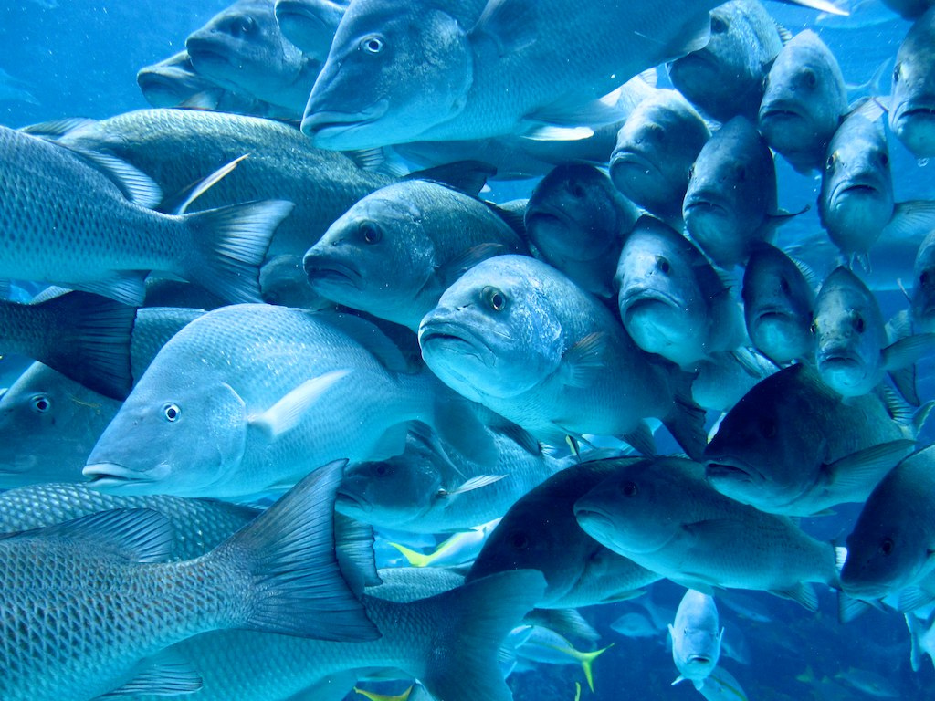 Fish personalities shaped by social interaction for School of fish