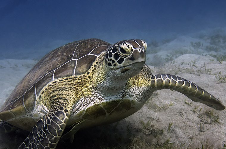 TEDs can prevent sea turtle bycatch
