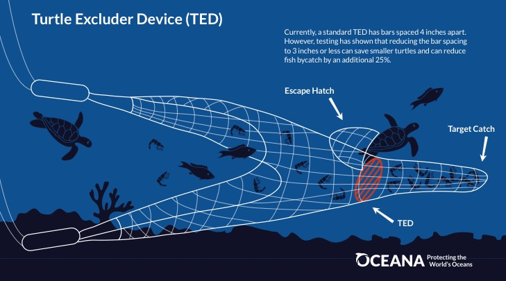 Turtle Excluder Device explained - Credit Oceana