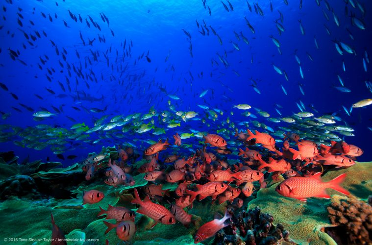 Coral reef bright spots