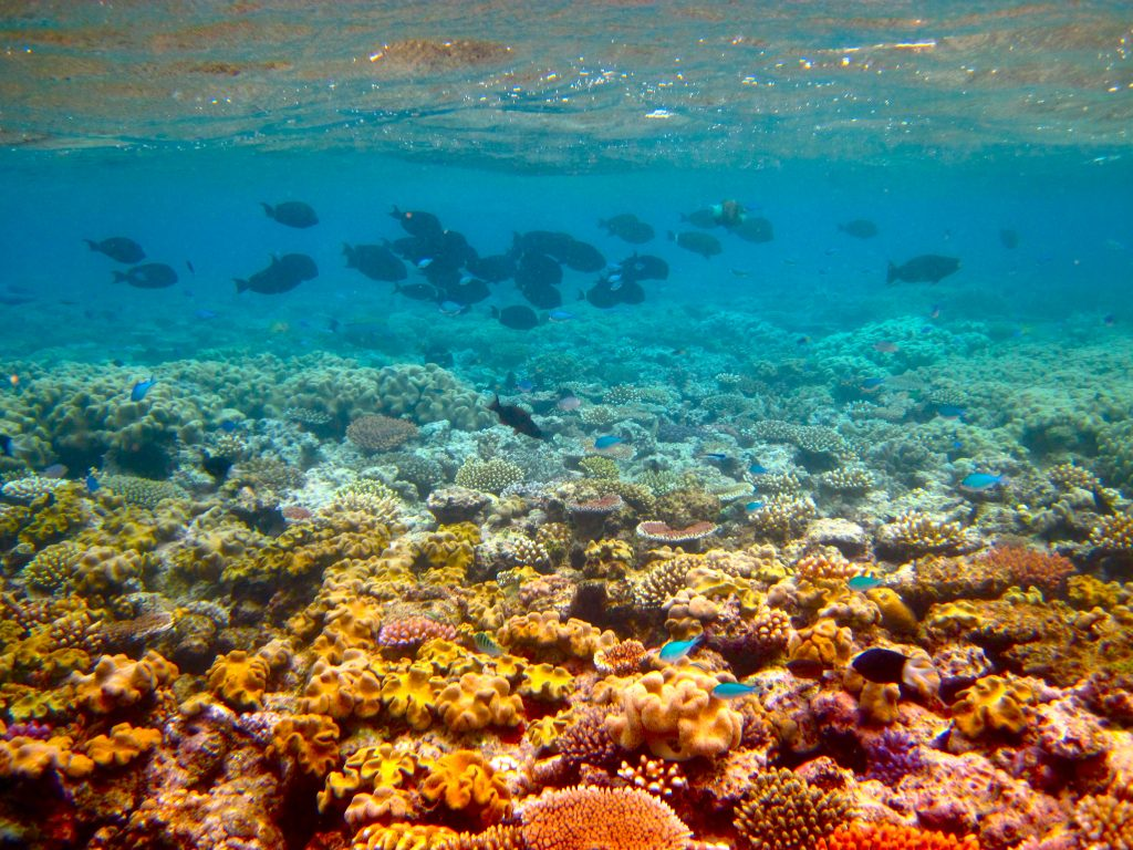 The Great Barrier Reef. The largest coral reef system in the world and the largest structure made by living organisms is under threat. (Kyle Taylor/Flickr)