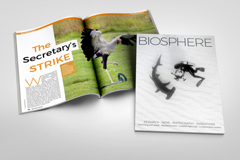Biosphere Issue 19
