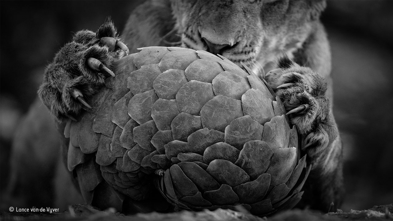 lance-van-de-vyver_wildlife-photographer-of-the-year-black-and-white-finalist