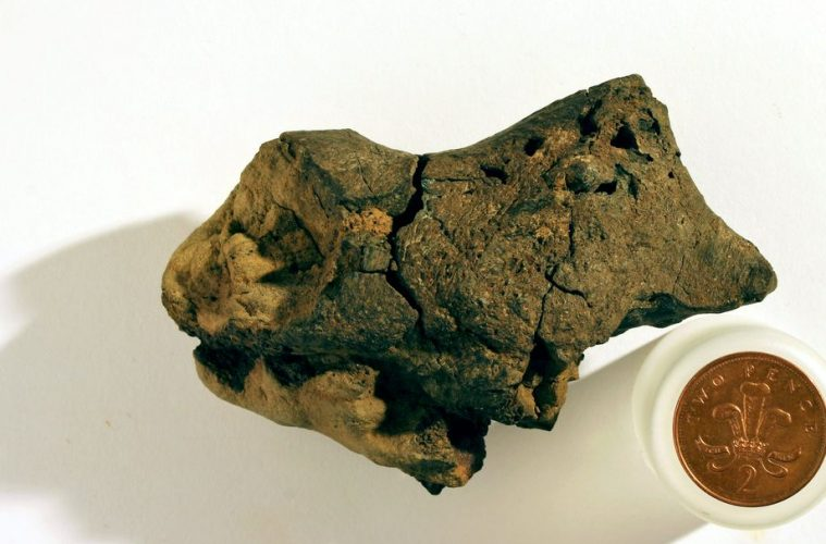World's first fossilised dinosaur brain discovered