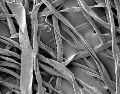 Cotton fibres viewed under a Scanning Electron Microscope (SEM) © Wikipedia