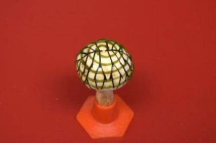 The button mushroom with graphene stripes embedded and a swirl of cyanobacteria living on the cap. Photo Credit: Sudeep Joshi, Stevens Institute of Technology