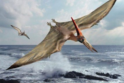 Pterodactyl-facts_b1c1