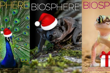 Bio Covers Xmas