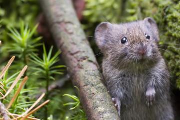 zz mouse Menno Schaefer shutter