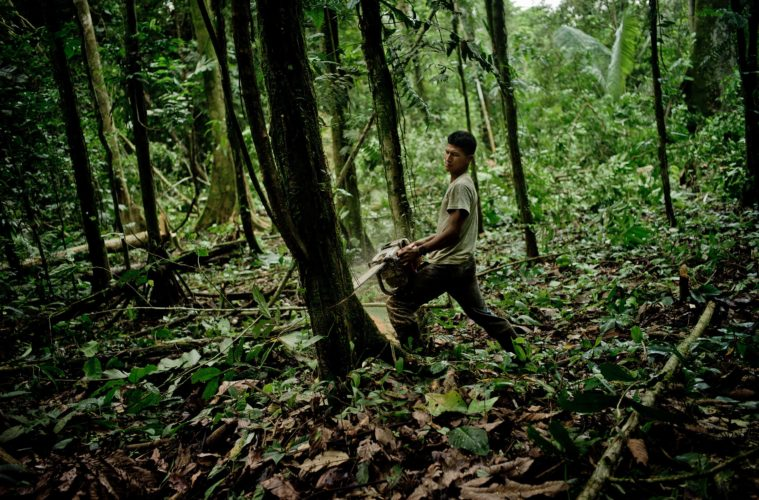 Giving up meat can save forests of the future
