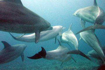 Understanding dolphin migration