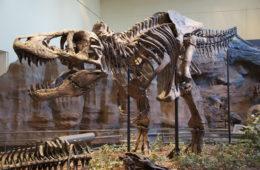 Some dinosaurs scavenge