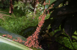 Ants forming rafts