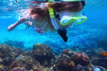 Snorkelers harm corals more than they realise