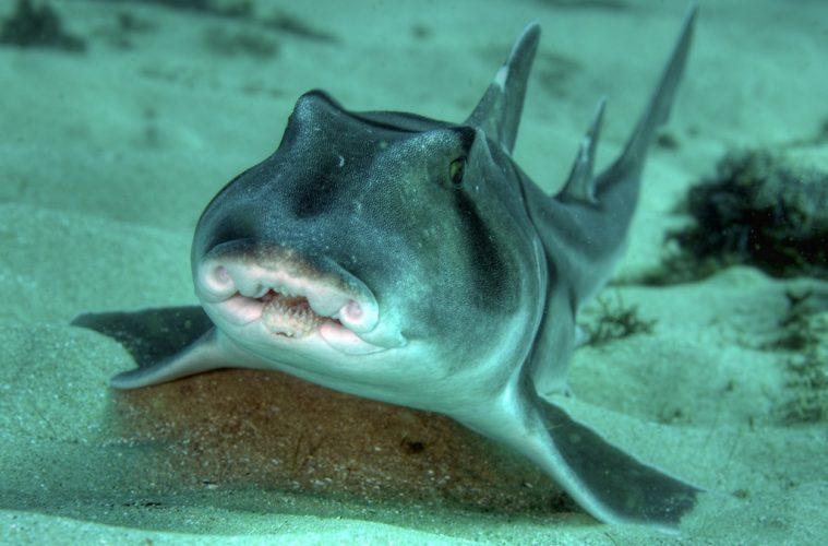 Shark personalities