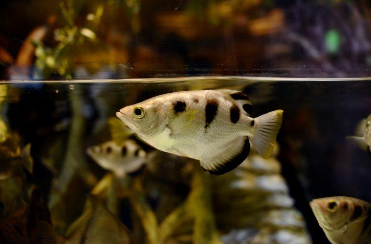 facial recognition, fish, anglerfish, spitting image